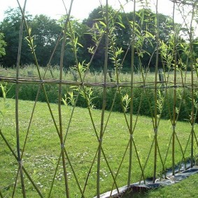 Фото перекрестного плетения живой изгороди из ивы