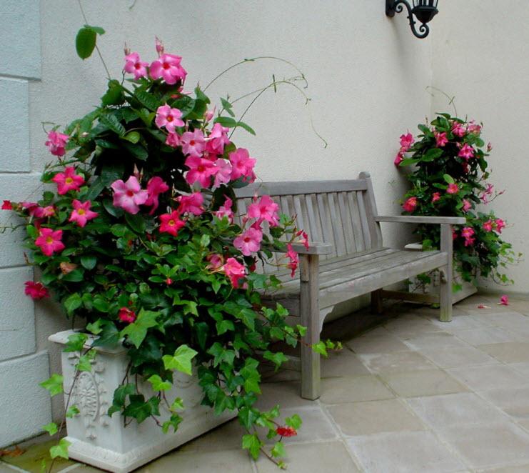 Деревянная скамейка между вазонами с цветами