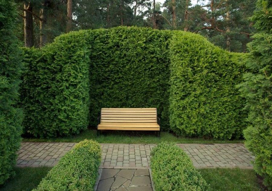 Скамейка для отдыха в саду с живой изгородью