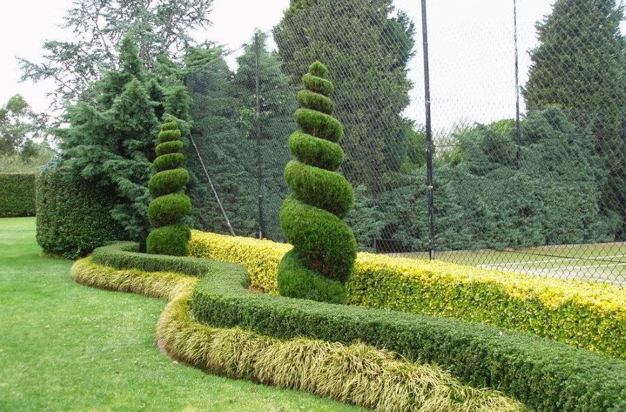 Спиралевидная стрижка декоративных растений