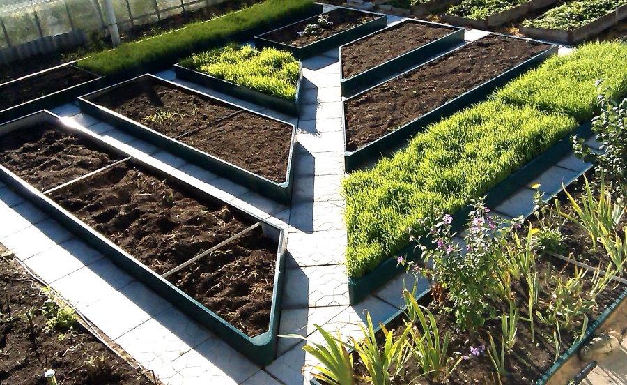 Идея оформления огорода красивыми грядками