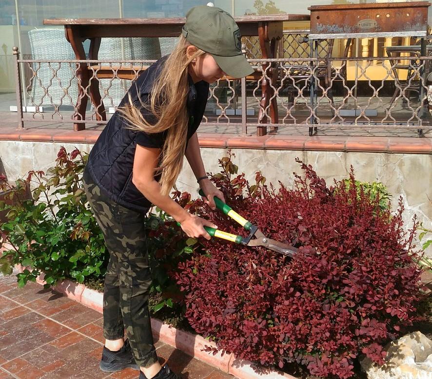 Стрижка куста барбариса садовыми ножницами