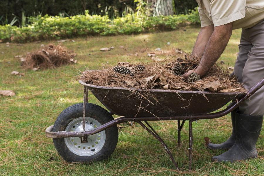 Садовая тачка с мульчой для укрытия приствольного круга жасмина