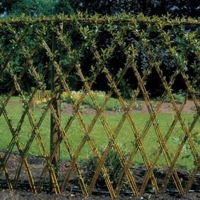 Схема плетения живой изгороди в 3 лозы