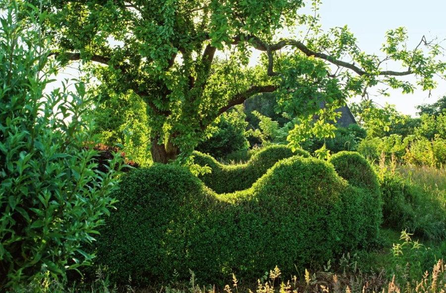 Волнистая изгородь волнообразной формы из обыкновенной бирючины