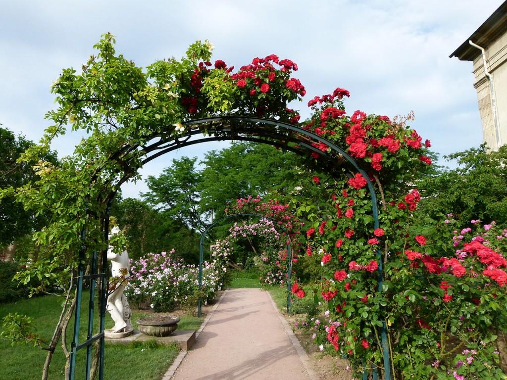 Декор садовой арки вьющимися растениями