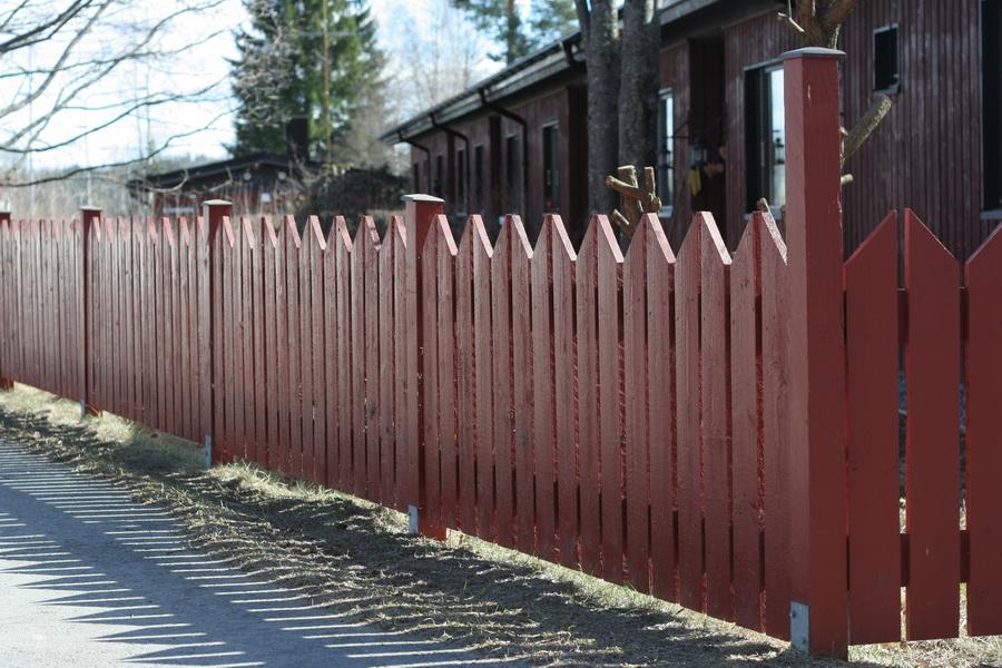 Окрашенный забор из деревянных досок на дачном участке
