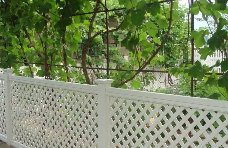Сетчатый забор из ПВХ перед виноградной лозой
