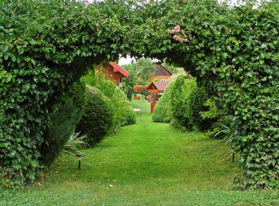 Арка в живой изгороди из вечнозеленых вьющихся растений