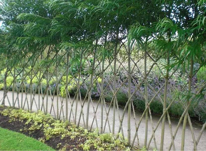 Живая изгородь из ивы с перекрестным плетением лозы