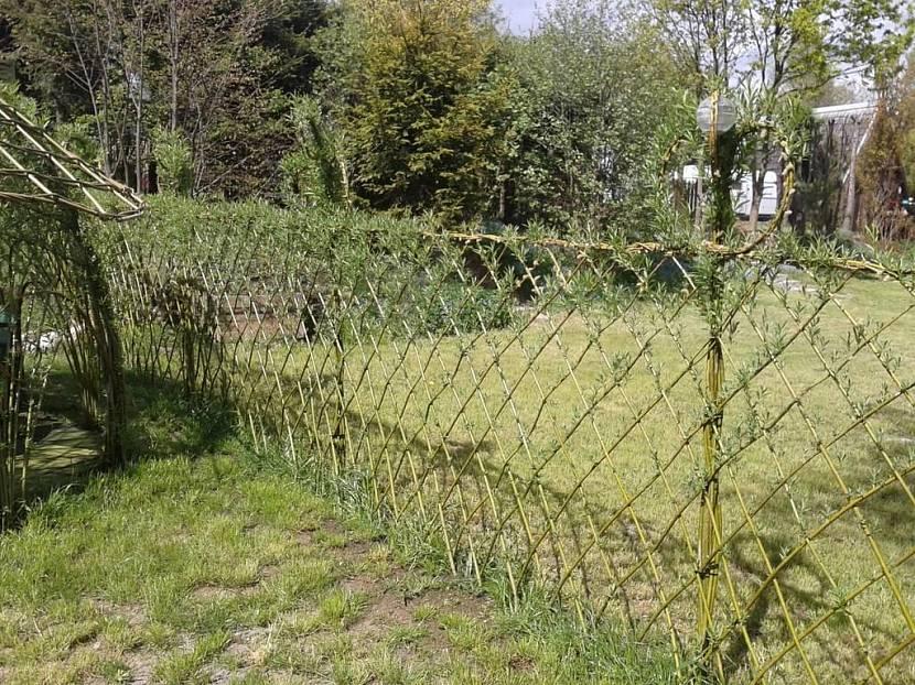 Забор из ивовых прутьев между дачными участками
