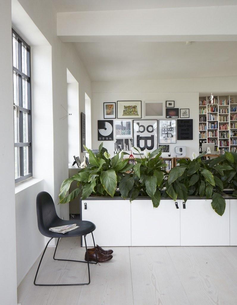 Живые растения в интерьере городской квартиры