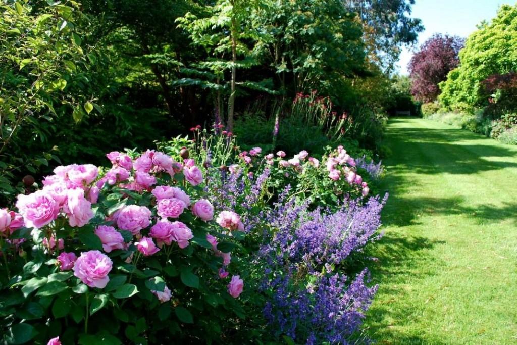 Розарий на садовом участке в английском стиле