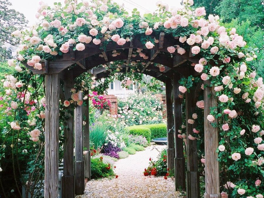 Розы на старой арке из натурального дерева