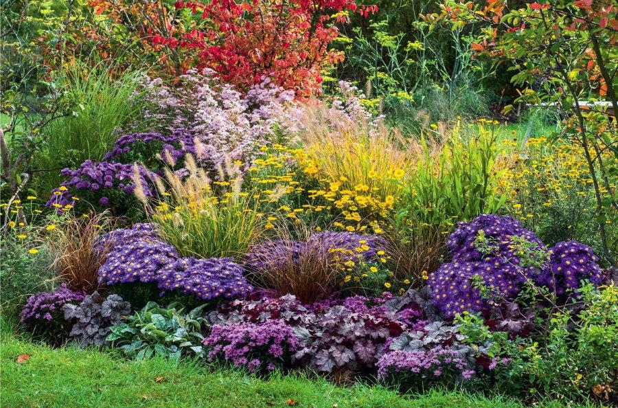 Миксбордер из астр и других многолетних цветов