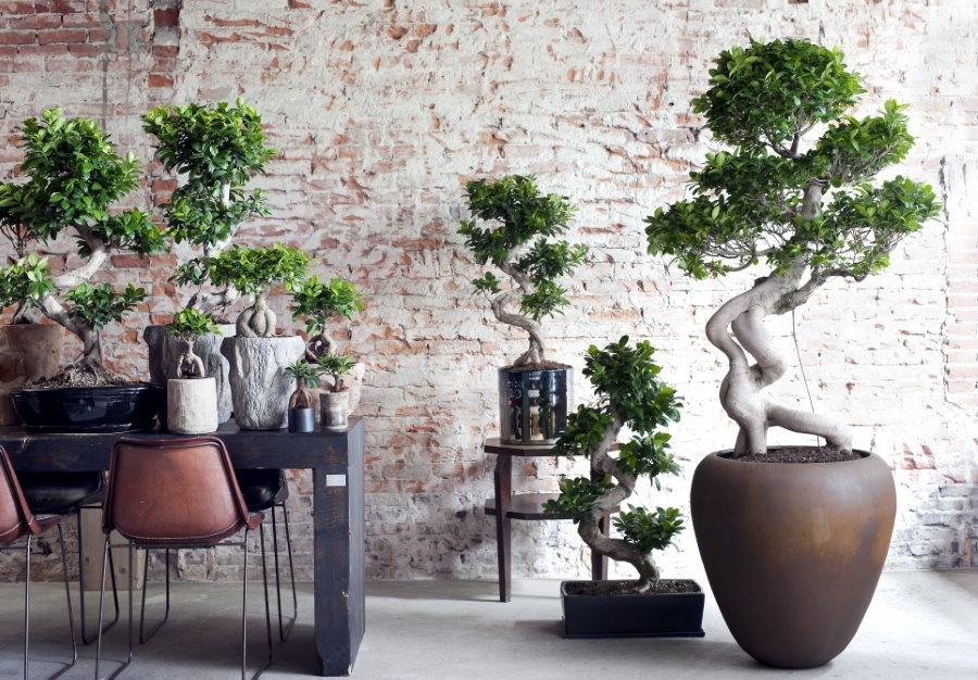 Растения бонсай в контейнерах на фоне кирпичной стены