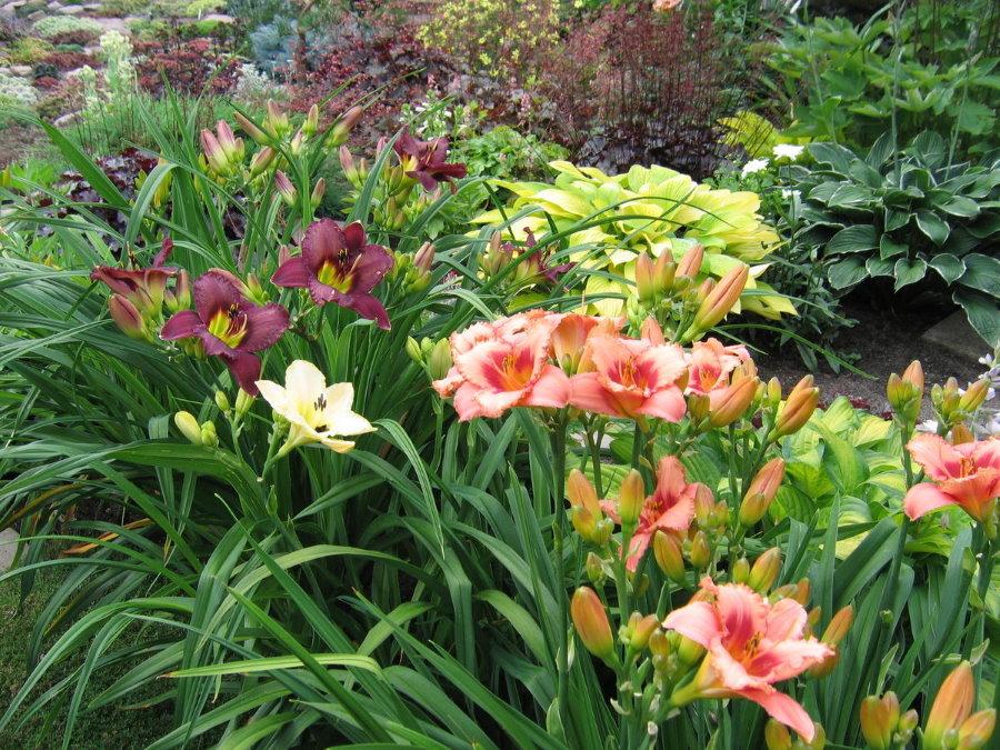 Клумба с лилейниками разнообразной расцветки