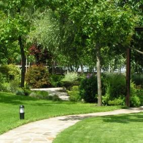 Садовая дорожка между высоких деревьев