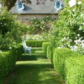 Зонирование сада живыми изгородями