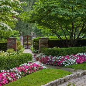 Розовые и белые петунии перед живой изгородью