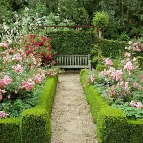 Кустовые розы за невысоким бордюром
