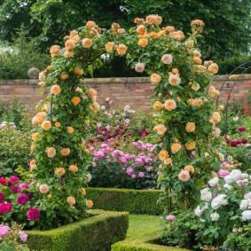 Кремовые розы на садовой арке