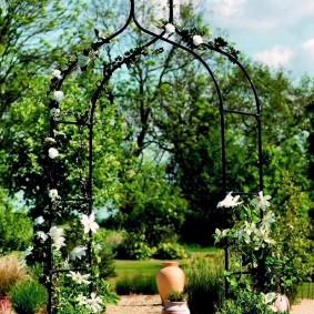 Белые клематисы на арки с пиками
