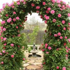Розовые бутоны на плетях ветвистых роз