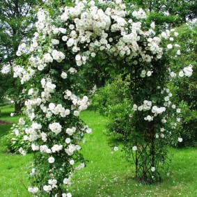 Белые цветки на арке из металла