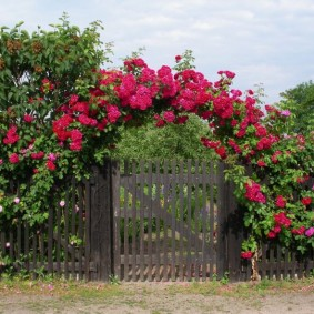 Декор забора в палисаднике плетистыми розами