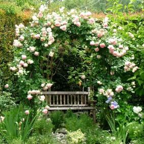 Старая скамейка под перголой с розами