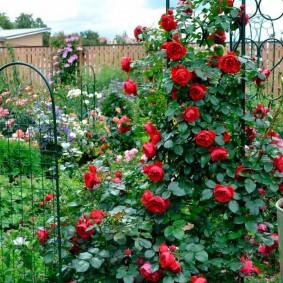 Красные розы на металлической опоре