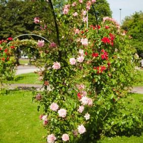 Стойка с розами на солнечном месте загородного участка