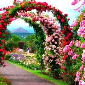 Цветочная аллея с металлическими арками
