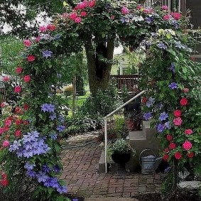 Сочетание роз с клематисами на садовой перголе