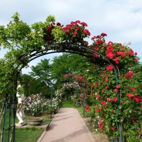 Вертикальное озеленение участка плетистыми розами