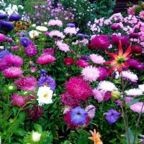 Красивый цветник с астрами и другими осенними цветами