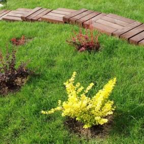 Разноцветные барбарисы на зеленой лужайке