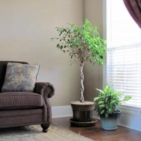Комнатное растение в углу гостиной