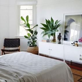 Теневыносливые растения в белой спальне