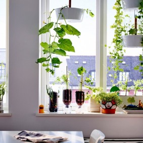 Декор подоконника живыми растениями