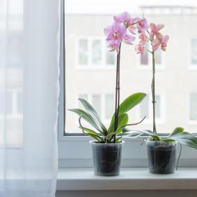 Розовые орхидеи на подоконнике в квартире