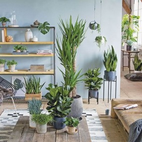 Домашняя оранжерея из неприхотливых растений