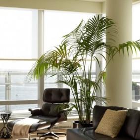 Живая пальма в комнате с панорамным окном