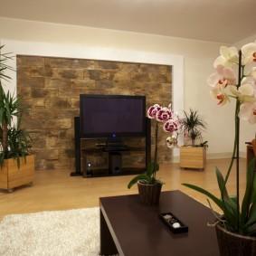 Орхидея на журнальном столике в зале