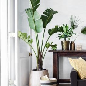 Напольная ваза с комнатным цветком