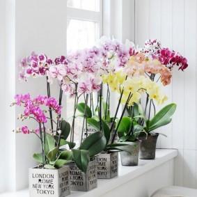 Разноцветные орхидеи в интерьере кухни-гостиной