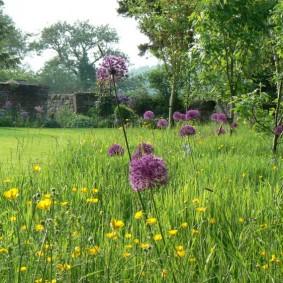 Луговой газон с полевыми цветами