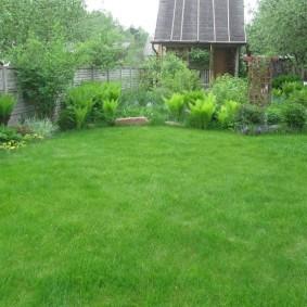 Ровная поверхность классического газона