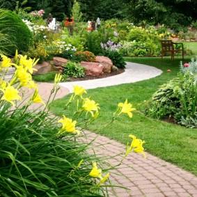 Желтые цветки на кусту лилейника